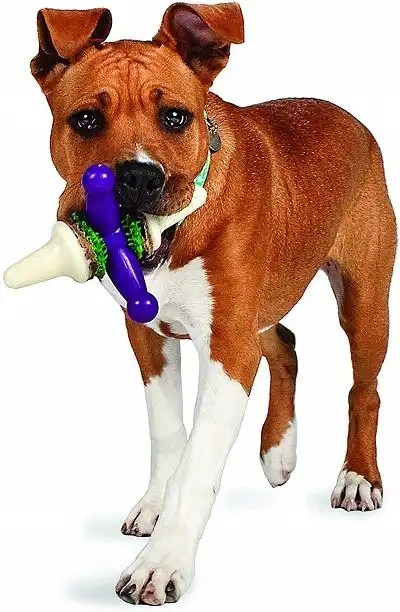 PetSafe Busy Buddy Jack Dog Toy, Chew Toy with Treats