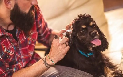 Best Dog Ear Cleaners & Treatments To Prevent Ear Infection and Itch