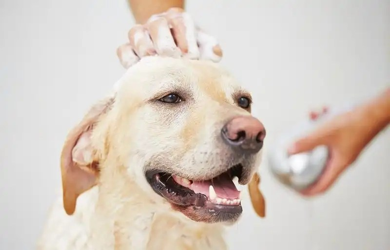 9 Best Waterless Shampoos For Dogs Who Hate Water
