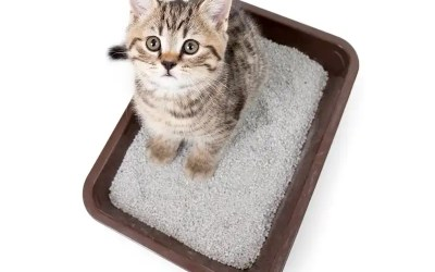 10 Best Cat Litters For Odor Control & Smell Elimination
