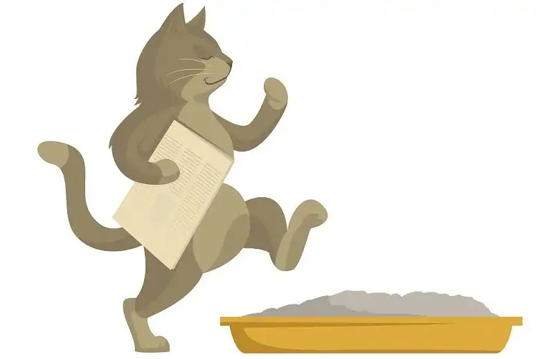 How to train your cat to use a cat litter box