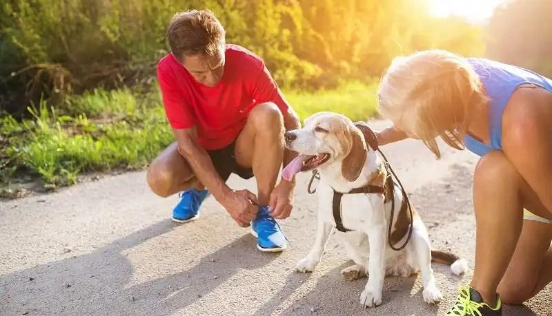 Senior dogs - a faithful companion