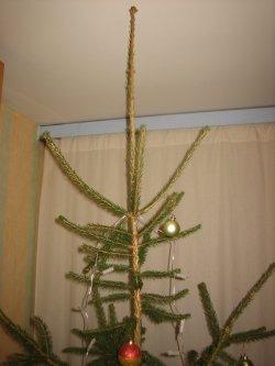 Jõulupuu ulatub laeni