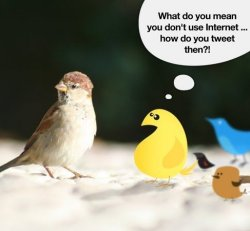 Kuidas sa Twitterdad?