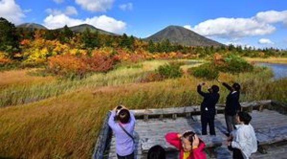 北八甲田の山々を背景に紅葉が見ごろを迎えている睡蓮沼周辺=3日午後、十和田市