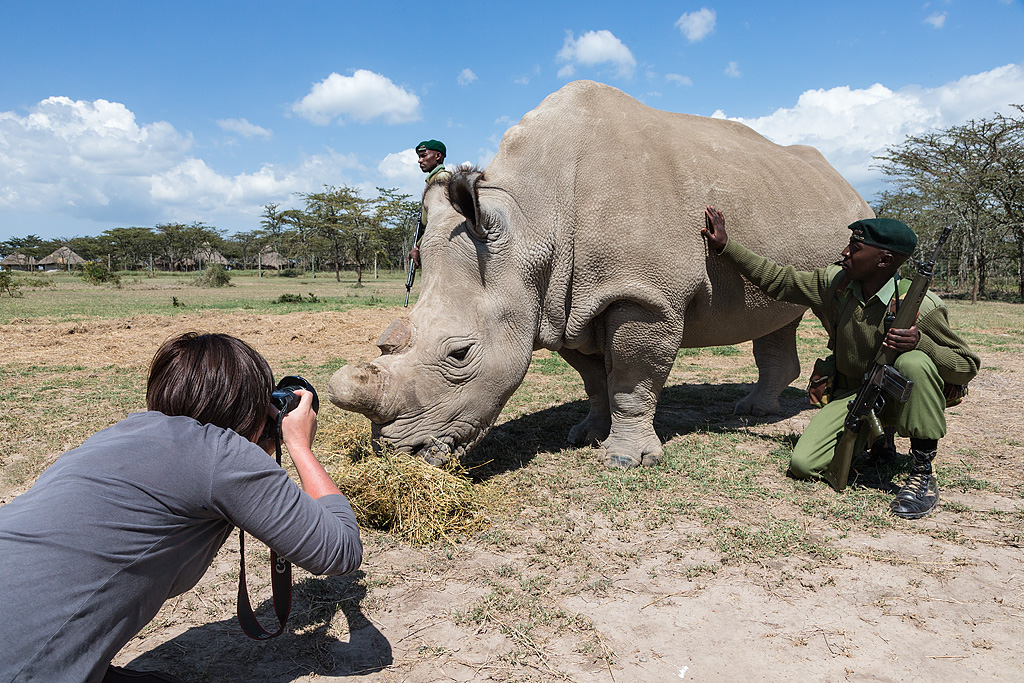 Ann Toon photographing northern white rhino