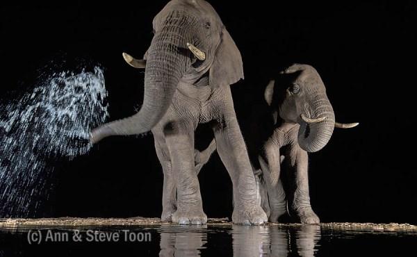 Elephants at Zimanga nocturnal hide