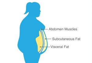 reduce visceral belly fat
