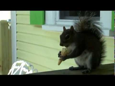 Putter the squirrel