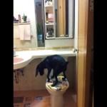 Dog uses toilet