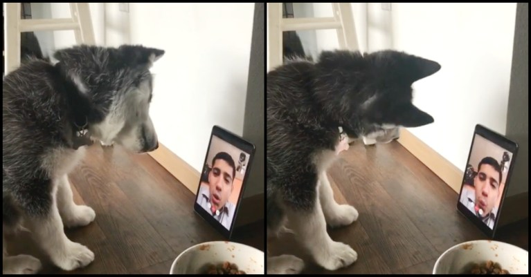 Kiko face timing