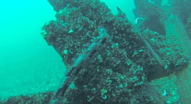 Dive under freighter