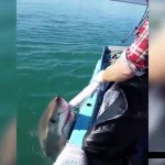 Australian fisherman and a great white shark