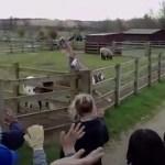 Darren the waving goat