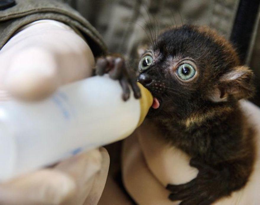 Cutest baby knaria