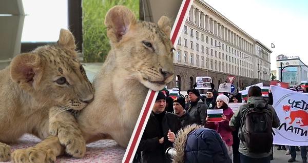 """Протест пред Министерски съвет, организиран от фондация """"Четири лапи"""""""