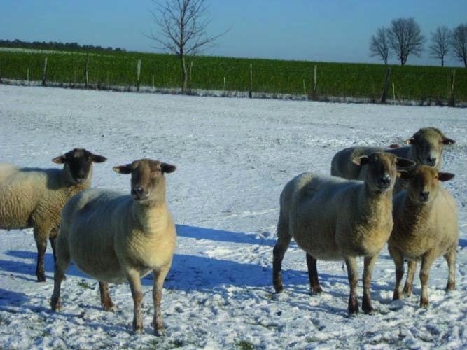Winter 2012 016