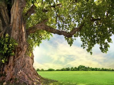 rezumat Stejarul din Borzesti