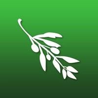 Olive Video Editor, Top10.Digital