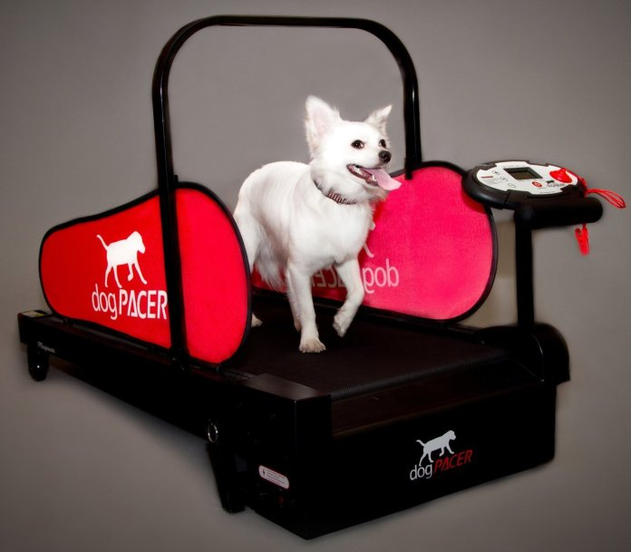 Moving with a Dog | Dog With Treadmill
