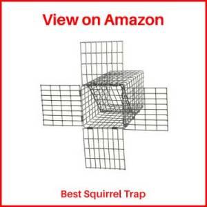 Northern-Industries-one-way-Squirrel-Trap