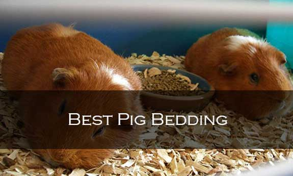 Best Pig Bedding