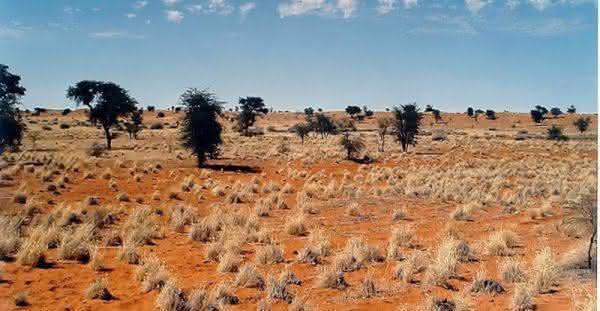Deserto do Kalahari