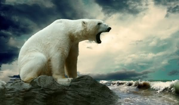 urso polar um dos animais mais perigosos