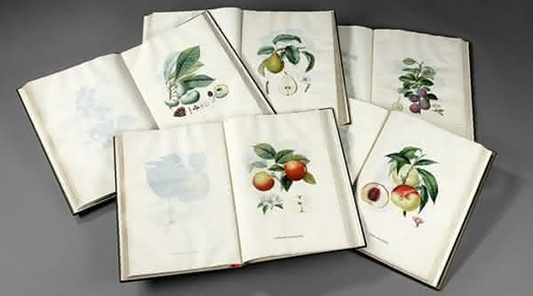 Traite des arbres fruitiers um dos livros mais caros