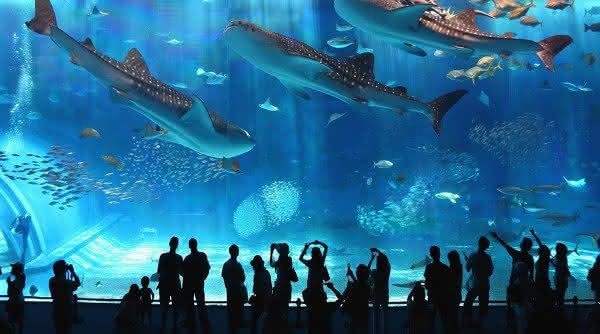 aquario de genova um dos maiores do mundo