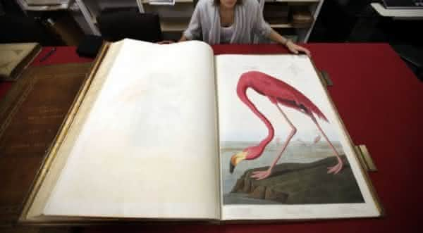 john james audubon birds of america livro