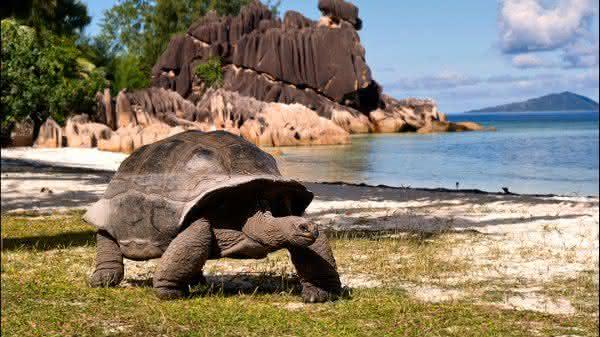 tartaruga gigante entre os animais mais lentos do mundo