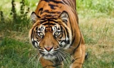 Top 10 animais em extinção
