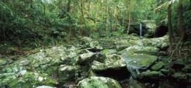 Top 10 maiores florestas do mundo