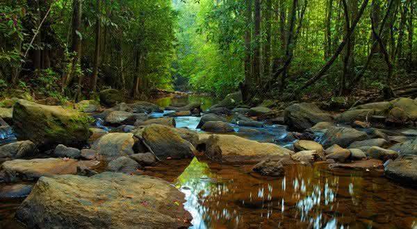 Reserva Florestal Sinharaja uma das maiores do mundo