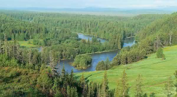 floresta taiga