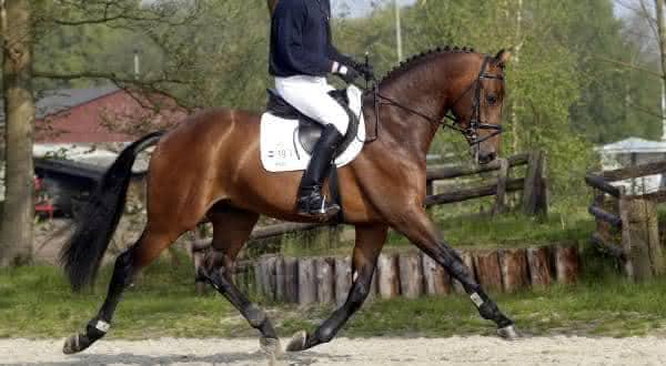 lord sinclair entre os cavalos mais caros do mundo