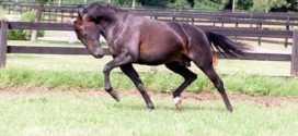 Top 10 cavalos mais caros da história