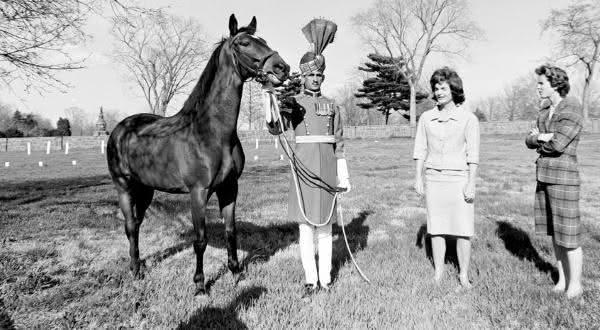 sardar um dos cavalos mais famosos do mundo