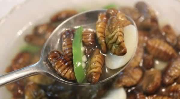 beondegi entre os alimentos mais bizarros do mundo