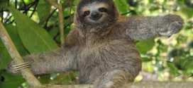 Top 10 animais mais lentos do mundo