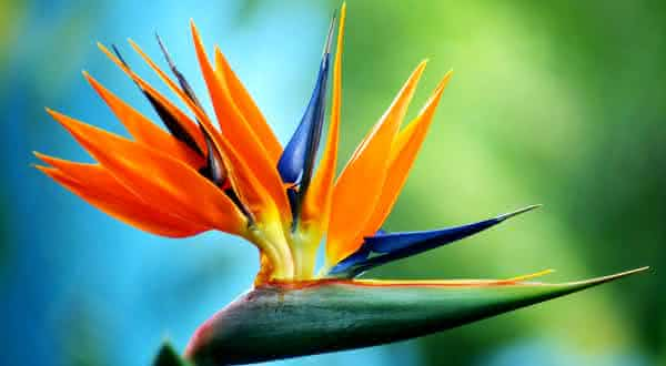 ave do paraiso entre as flores mais bonitas do mundo