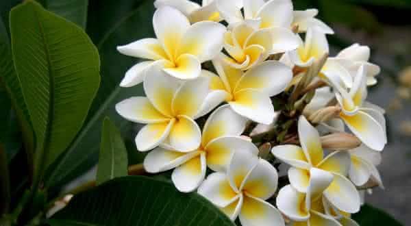 Flores As 10 Flores Mais Lindas Do Mundo