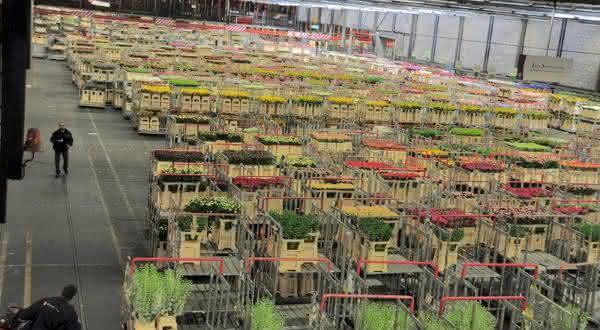 Aalsmeer Flower Auction Building entre as maiores fabricas do mundo