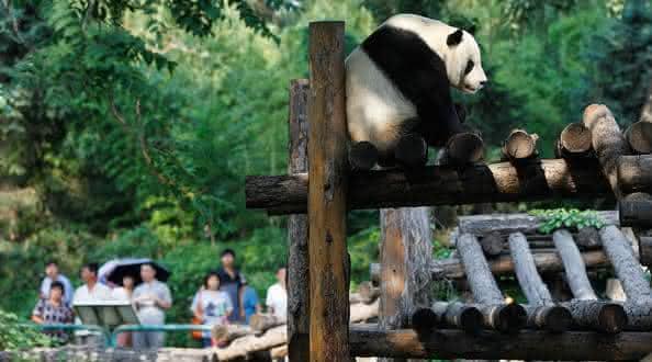 Beijing Zoo entre os melhores zoologicos do mundo
