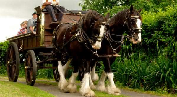 The Horsemans Word entre as sociedades secretas que voce nao sabia que existissem