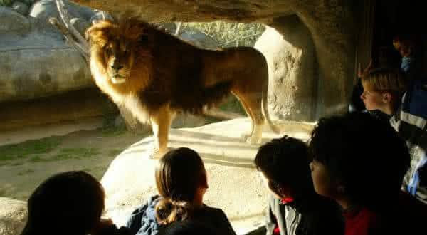 Wellington Zoo entre os melhores zoologicos do mundo