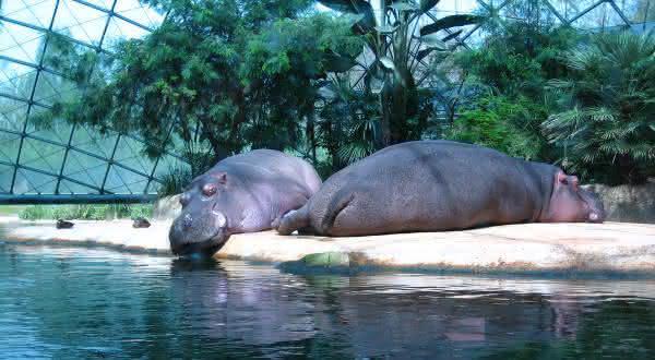 berlin zoo entre os melhores zoologicos do mundo