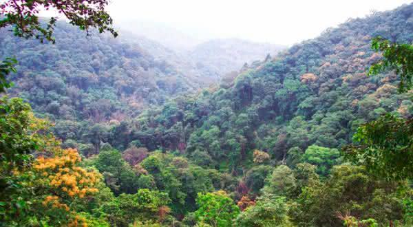 Indo-Burma entre as florestas mais ameacadas do mundo