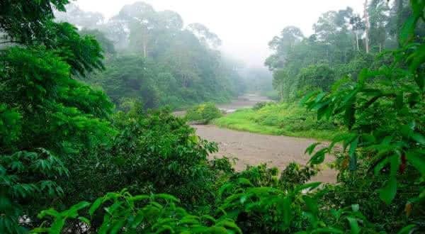 Sundaland entre as florestas mais ameacadas do mundo